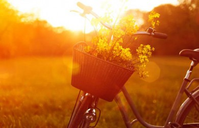 Eventagentur an der Ostsee zum Firmenevent und Betriebsausflüge Ostsee mit Picknick, Radtour an der Ostsee und in der Holsteinischen Schweiz für Gruppenreisen, Teamevents und Betriebsausflüge inklusive Reiseleitung